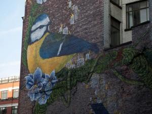 Blue Tit mural